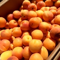 Nectarines at Pasadena Farmers' Market