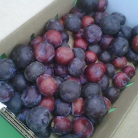 Avila and Sons Farms' Plums