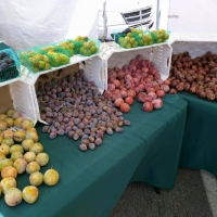 Variety of plums at Malibu Farmers' Market