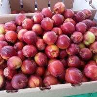 Plums at Santa Monicas Farmers' Market